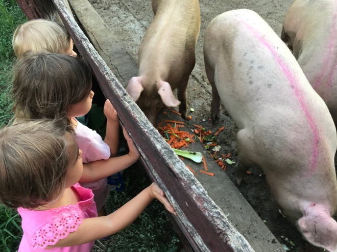 Feeding pigs Tucker Maya VV